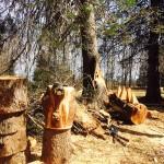 Atelier - sculpture sur bois Luc Pelletier