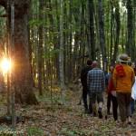 marche en forêt au coucher de soleil